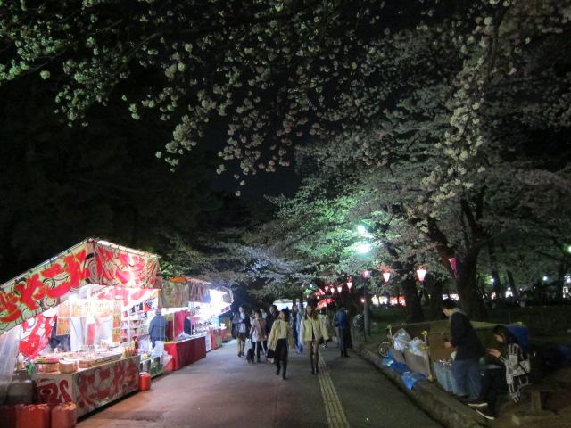 大宮公園の夜桜